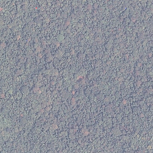 Pleiades PSM 0,50 m colorido em area de mata fechada, Aripuanã- MT, Escala 1:5.000