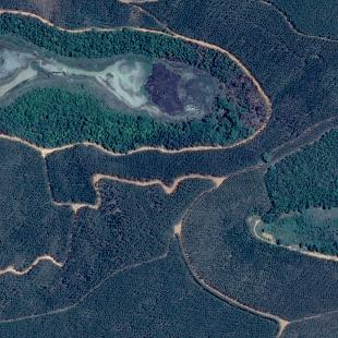 Pleiades de 0,50 m de resolução de uma área florestal cultivada perto de Ipaba, MG