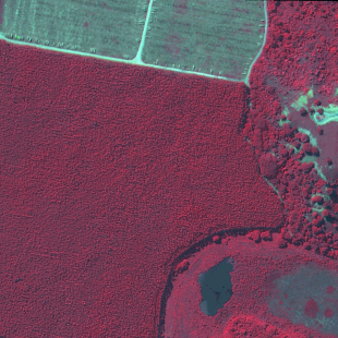 Kompsat 3, PSM, 70 cm de resolução cores falsas, área florestal em colheita